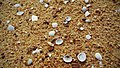 Beach sand and shells 2 by sankar.jpg
