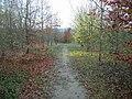 Beechwoods Nature Reserve - geograph.org.uk - 730155.jpg