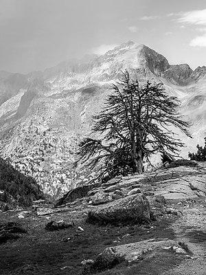 Dead tree on the trail to Forau de Aigualluts. Huesca, Aragon, Spain