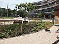 Beplanting Plein winkelcentrum Heksenwiel DSCF7464.jpg