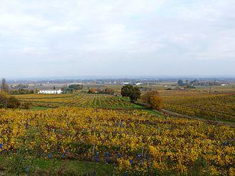 Monbazillac AOC - Monbazillac vineyards in the autumn