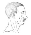 Bertillon - Identification anthropométrique (1893) 356 n&b.png