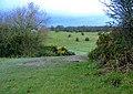 Beverley Westwood - geograph.org.uk - 643175.jpg