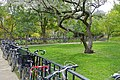 Bicycles - McGill University - Montreal, Canada - DSC07717.jpg