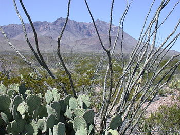 English: Cactus at Big Bend National Park in T...