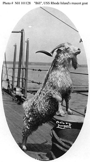 Bill the Goat - Image: Billthegoat