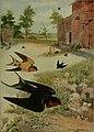 Bird lore (1908) (14564424777).jpg