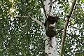 Bird nest boxe on a birch.jpg