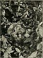 Bird notes (1922) (14568923420).jpg