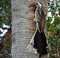 Birds MG 0662MOD (6477815929).jpg