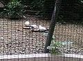 Birds in Zoo Negara Malaysia (8).jpg