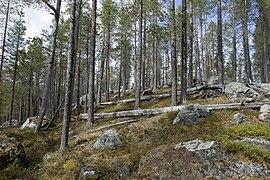 Björnlandet National Park, Sweden.jpg