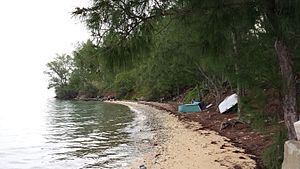 Sea glass - Black Bay Beach in Sandys Parish, Bermuda is covered in green, white, clear, and some brown sea glass.