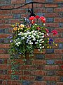 Black Horse Inn patio flower basket in Nuthurst West Sussex England.jpg
