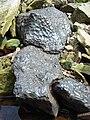 Black limestone, Kettlegrain Sike - geograph.org.uk - 449299.jpg