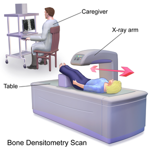 Dual-energy X-ray absorptiometry - Image: Blausen 0095 Bone Densitometry Scan