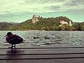 Bled (9730687314).jpg
