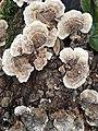 Bloom Fungus.jpg