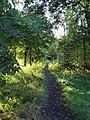 Bluebell Woods - geograph.org.uk - 53295.jpg