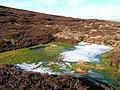 Bog on Long Crag - geograph.org.uk - 342291.jpg