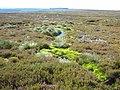 Bollihope Moor - geograph.org.uk - 510420.jpg