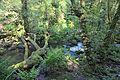 Bosque - Bertamirans - Rio Sar - 021.jpg