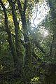 Bosque - Bertamirans - Rio Sar - 031.jpg