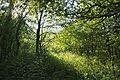 Bosque - Bertamirans - Rio Sar - 034.jpg