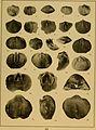 Brachiopod genera of the suborders Orthoidea and Pentameroidea (1932) (20220889089).jpg
