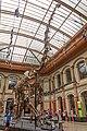 Brachiosaurus brancai Berlin 2.jpg