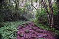 Bridal Veil Falls, Mpumalanga, South Africa (20522647491).jpg