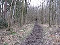 Bridleway in Woodshill Copse - geograph.org.uk - 1196894.jpg