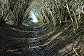 Bridleway through coppiced trees - geograph.org.uk - 311989.jpg