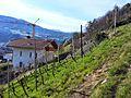 Brixen, Province of Bolzano - South Tyrol, Italy - panoramio (25).jpg