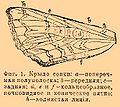 Brockhaus and Efron Encyclopedic Dictionary b60 672-1.jpg