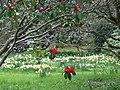 Brodie Castle Gardens. - geograph.org.uk - 1247136.jpg
