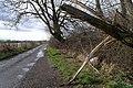 Broken Willow on Warren Lane - geograph.org.uk - 728427.jpg