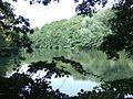 Bronx River02.jpg