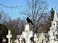 Bucuresti, Romania, Cimitirul Bellu Catolic (cioara de Bucuresti) (B-IV-a-B-20118) (3).JPG