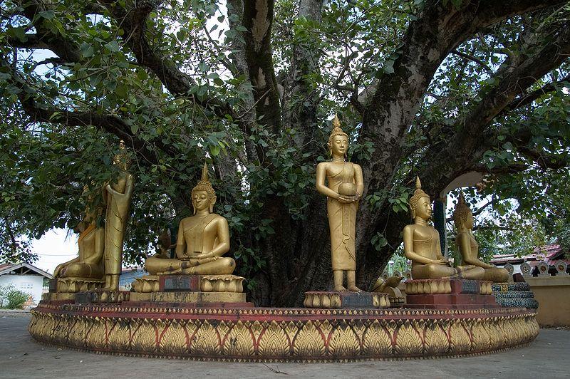 File:Buddha sculptures at That Luang.jpg