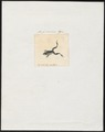Bufo minimus - 1700-1880 - Print - Iconographia Zoologica - Special Collections University of Amsterdam - UBA01 IZ11500151.tif
