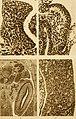 Bulletin international. Resumés des travaux présentés (1917) (20441358655).jpg
