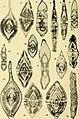 Bulletins of American paleontology (1958-1959) (20315031678).jpg