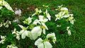 Bunga kertas (1).jpg