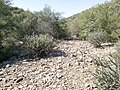 Butcher Jones Trail - Mt. Pinter Loop Trail, Saguaro Lake - panoramio (167).jpg