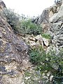 Butcher Jones Trail - Mt. Pinter Loop Trail, Saguaro Lake - panoramio (68).jpg
