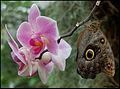 Butterfly (4615856575).jpg