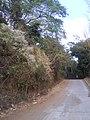 CAMINO A HUIZUCAR - panoramio (2).jpg
