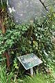 CBN Aristolochia sprucei 2015-08-02 Briand (20101735268).jpg