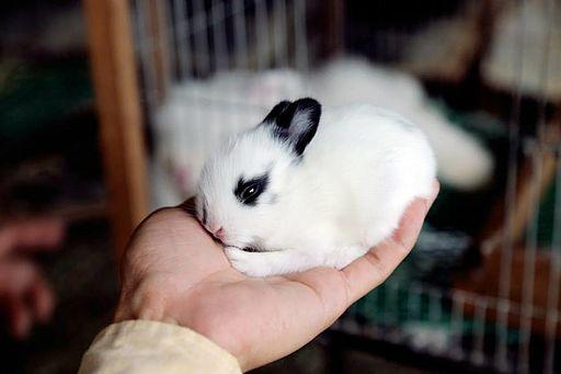 CamboFarm Rabbitry